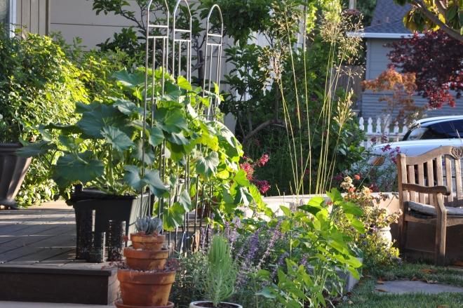 pumpkins, salvia and sunflowers