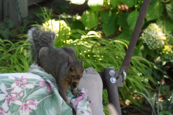 squirrel on garden swing