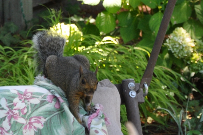 squirrel on garden swing