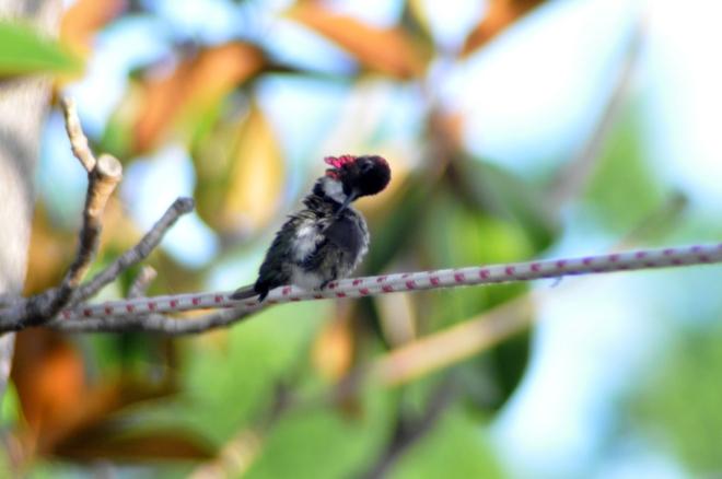 hummingbird grooming