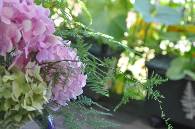 Hydrangeas and Asparagus Plumosus