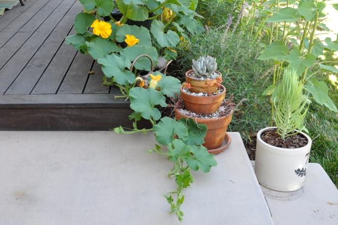 pumpkin vine trails deck