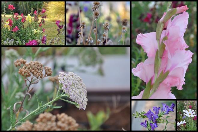 curb garden collage august