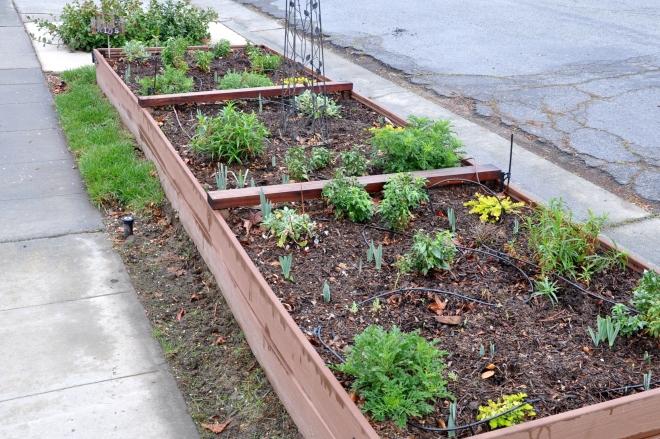 curb garden grass removal