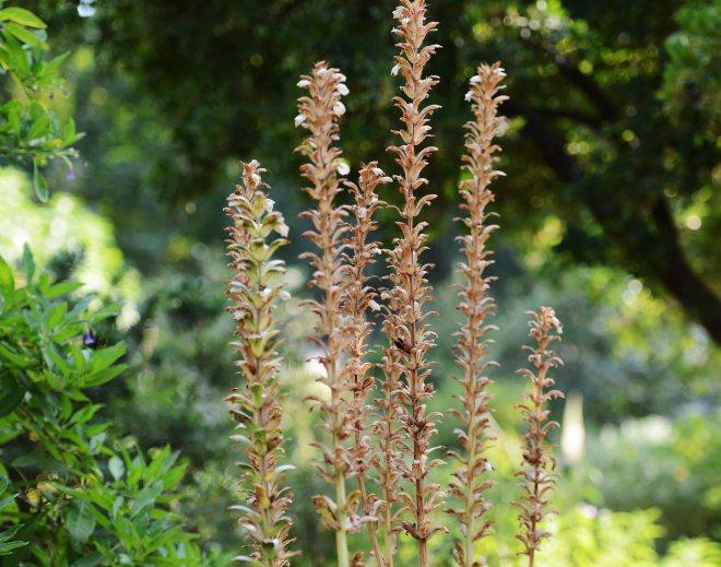 Dried_Flowers_DSC_8602