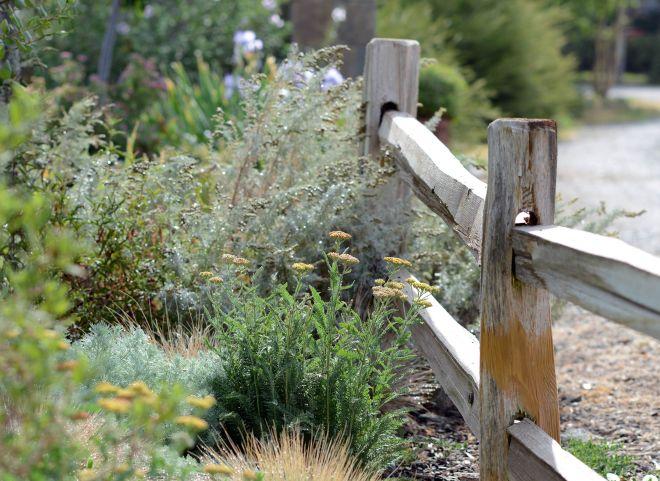 Garden_DSC_9530