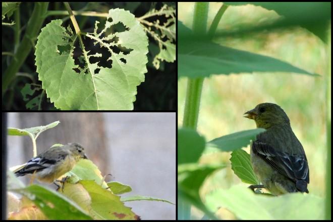 sunflower bird collage