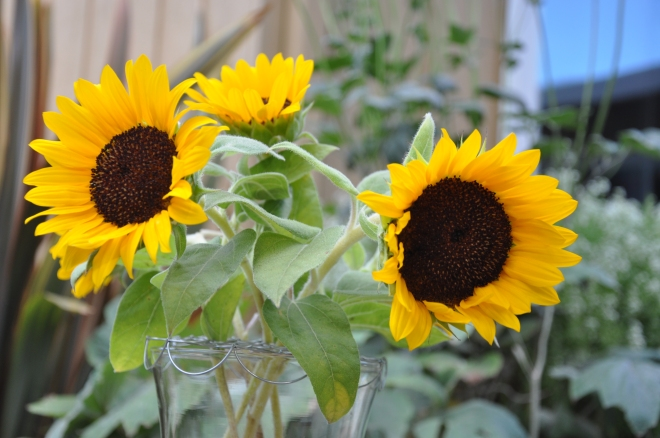 sunflowers in a vase on monday