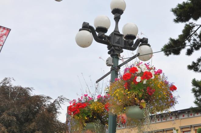 victoria flower baskets