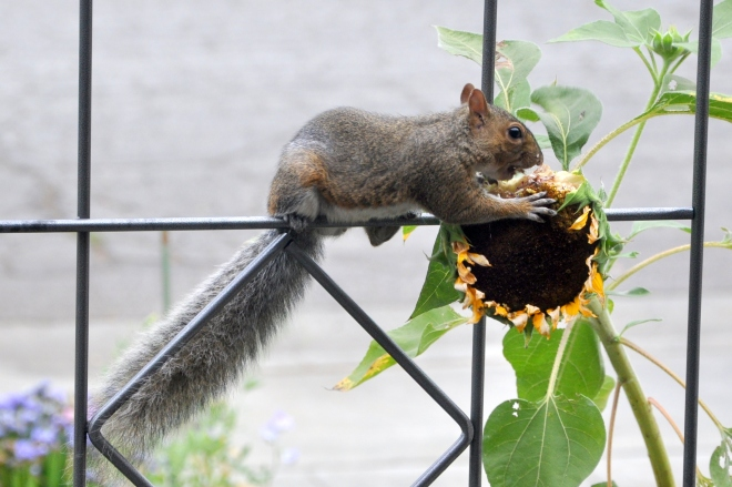 squirrel with aligned tail