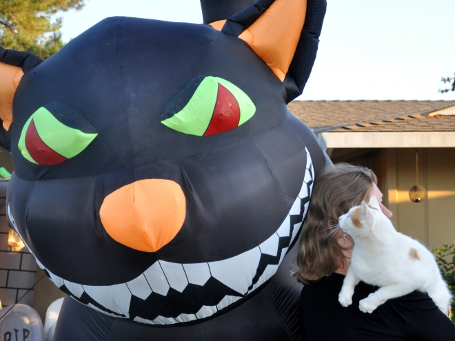 Giant cat inflatable and the great white hunter