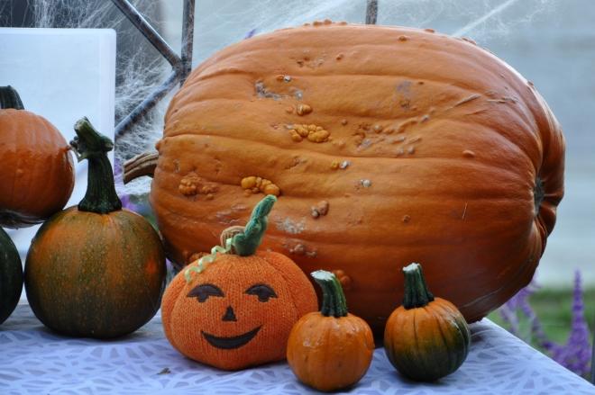 Eclectic Pumpkins