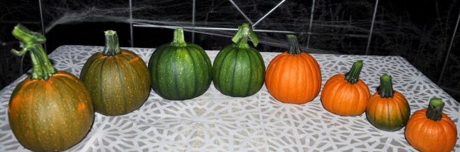 October pumpkin harvest