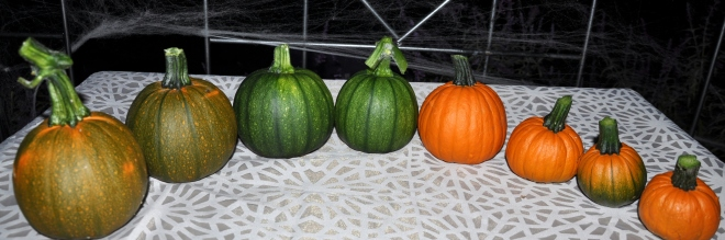 October pumpkin harvest