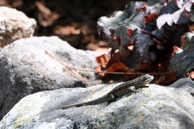 Tiny lizard catching sun on the rock wall