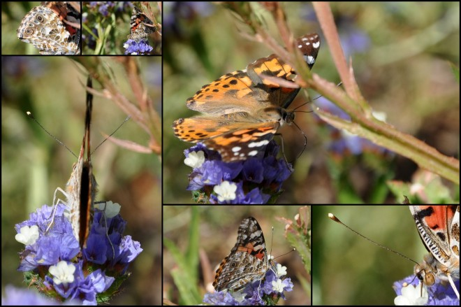 butterfly collage july 2014