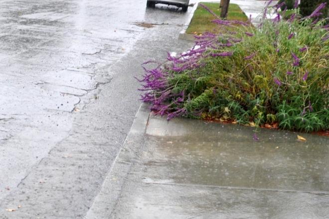 rain in the gutters