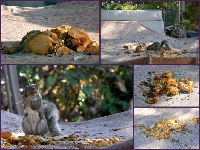 squirrel feast 2014