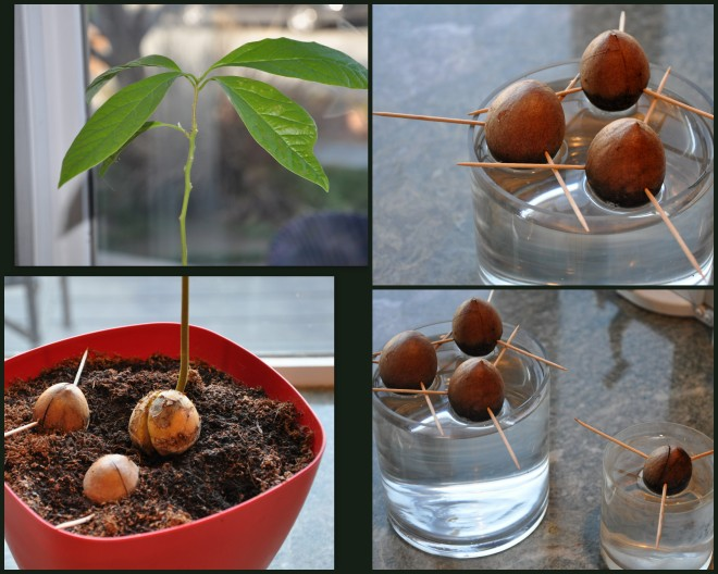 avocado pit collage