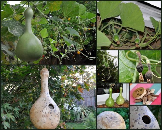 birdhouse gourd collage 2014
