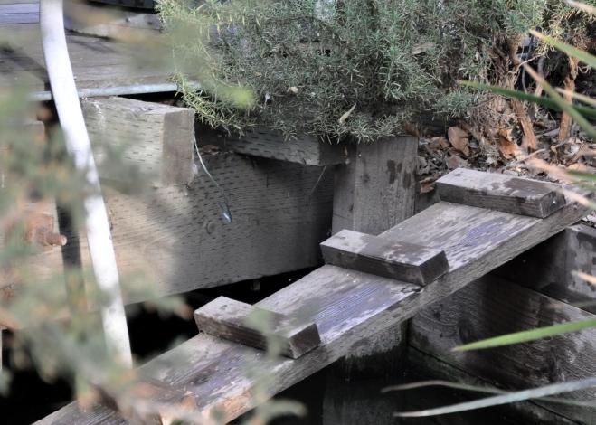 Delta Queen thoughtful bridge for the ducks