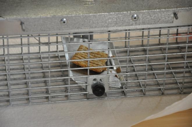 peanut butter in rat trap