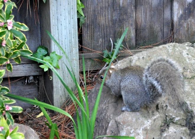nonchalant squirrel