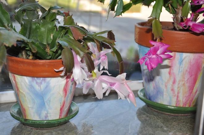 covered petra paper pots