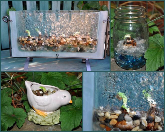 glass vase narcissus collage