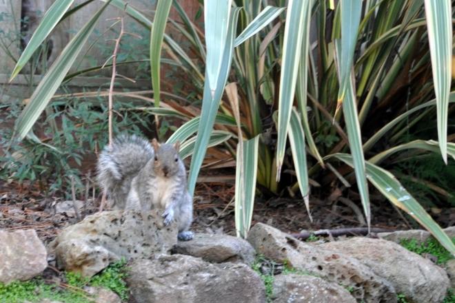 squirrel under fruit tree