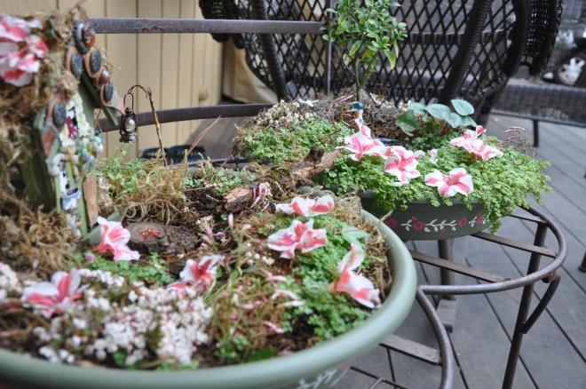 fairy garden with azaleas