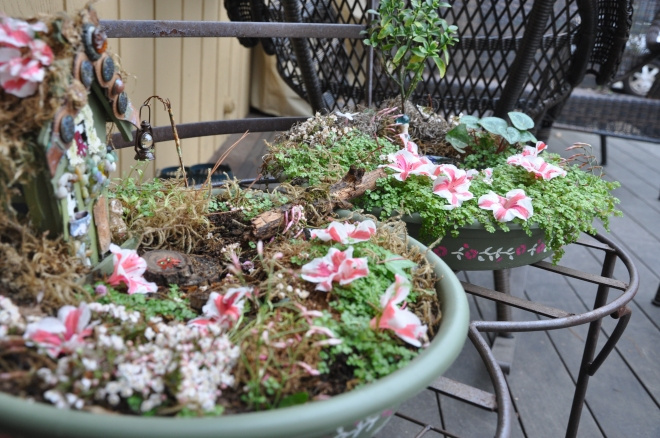 fairy garden with azaleas