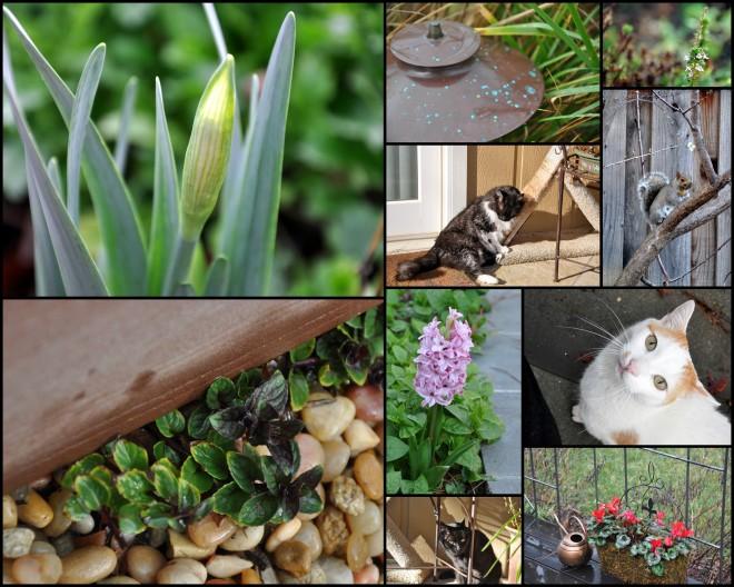 2015 spring garden collage