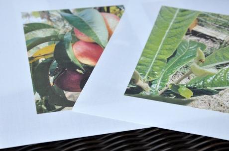 photos printed on cotton