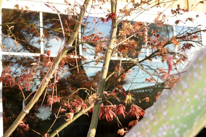 reflective window