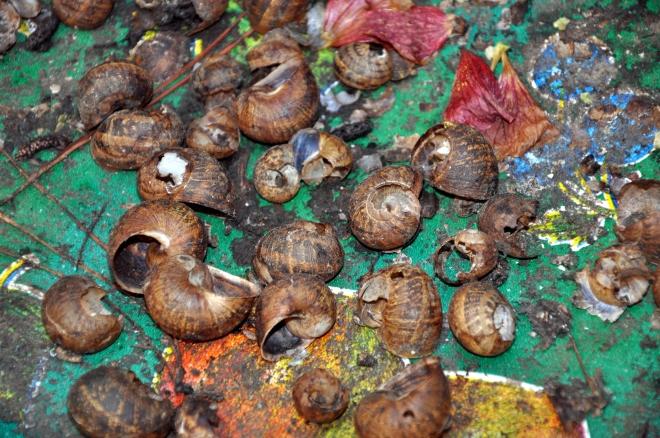 snail wasteland