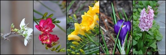 spring bulb banner collage