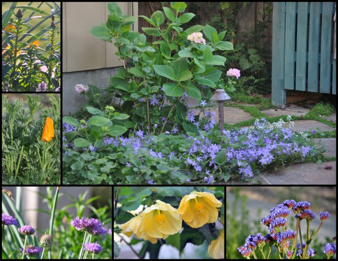 2015 spring garden collage-001