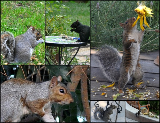 2015 Squirrels in the garden