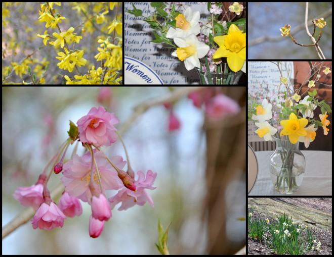 flowers blooming in Laurie's garden
