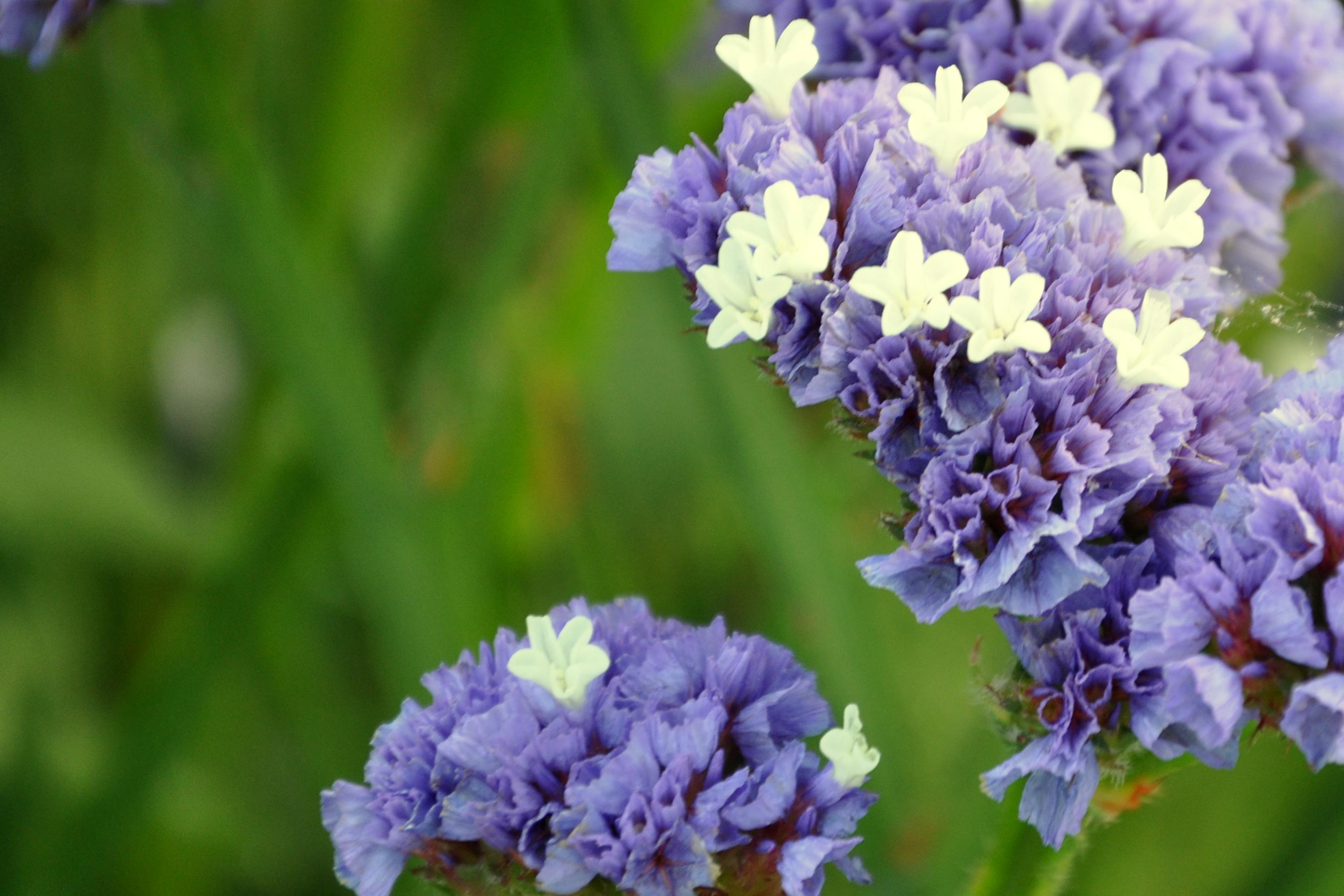Purple love in a mist – Gardening Nirvana