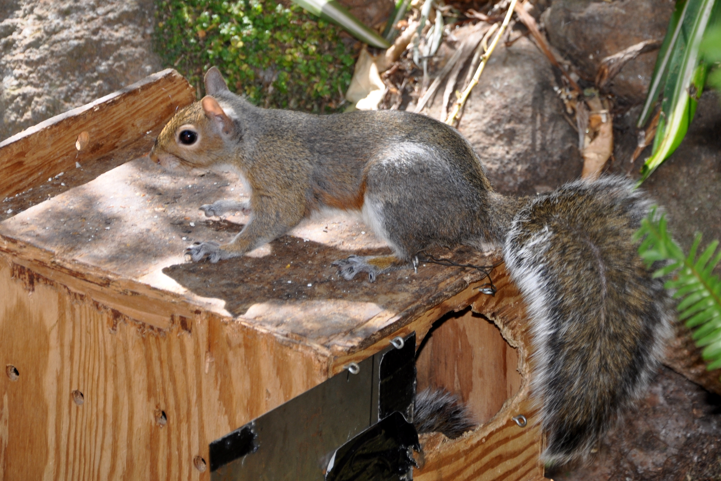 A Scurry of Baby Squirrels – Gardening Nirvana