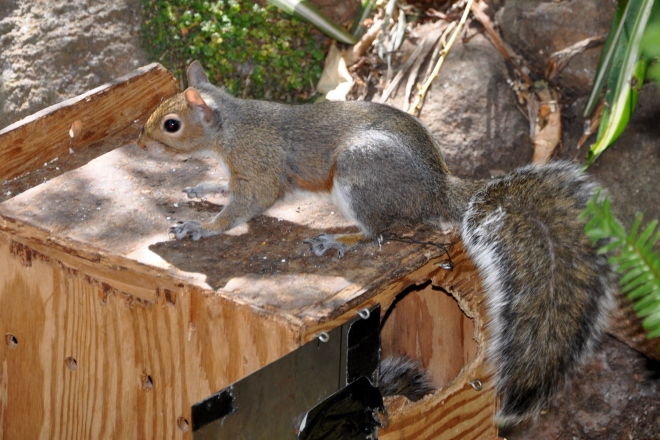 squirrel on top of box