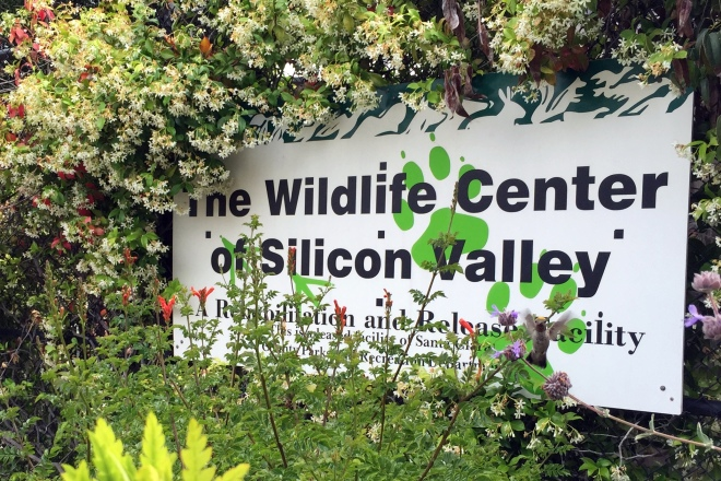 the wildlife center of silicon valley