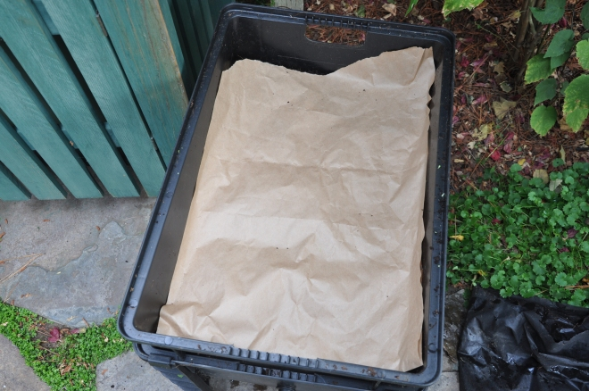 worm bin with paper