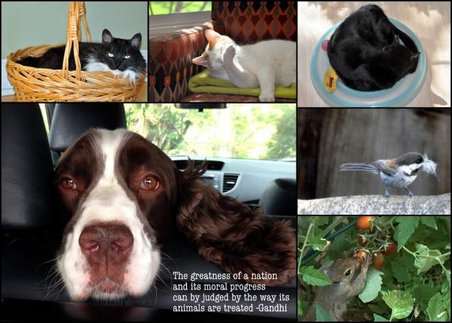 animal collage 2015