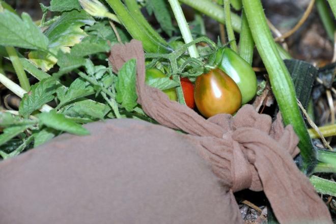 pumpkin under cover