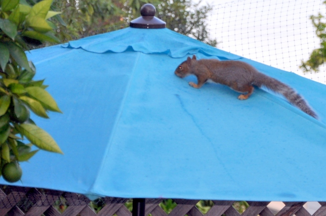 squirrel on umbrella