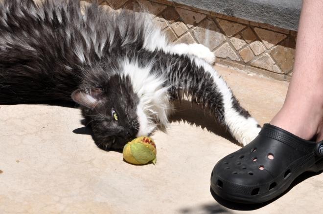 lindy with catnip