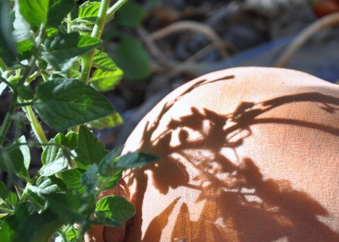 pantyhose clad pumpkin